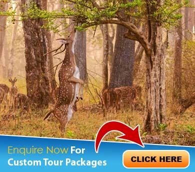 Mudumalai Tour Packages